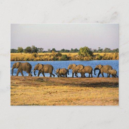 Elephants Postcard postcard