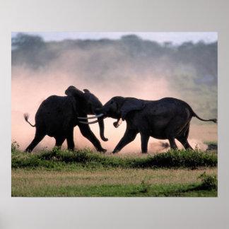 Elephants. Poster
