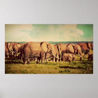 Elephants poster
