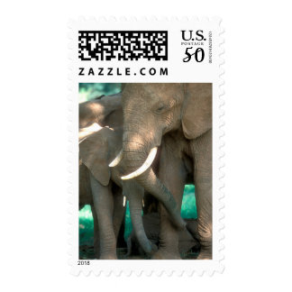 Elephants Protecting Young Postage