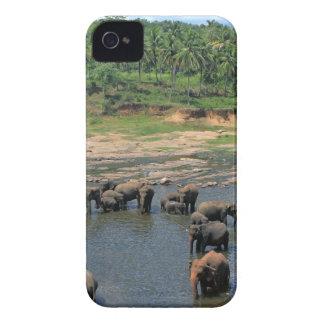 Elephants Sri Lanka iPhone 4 Cover