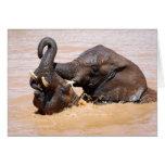 Elephants water world greeting card
