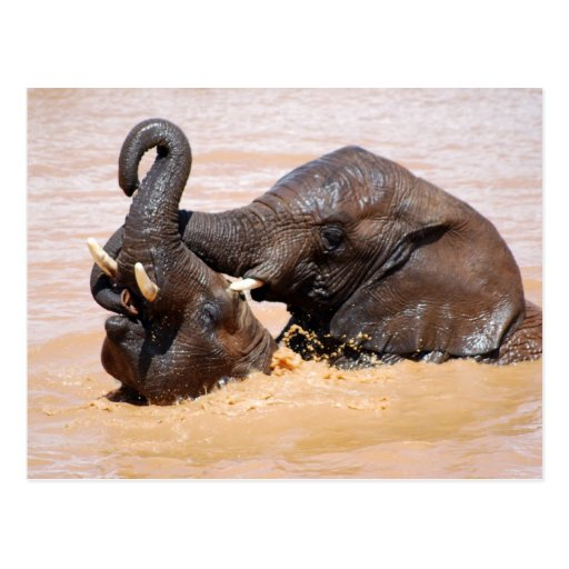 Elephants water world postcard