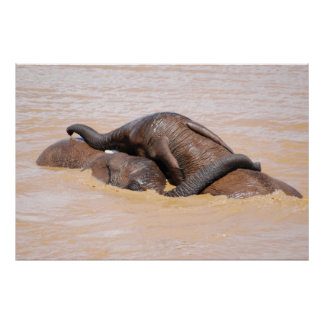Elephants water world poster