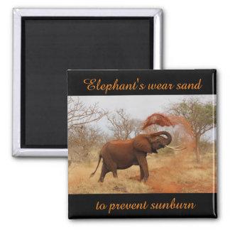 Elephant's wear sand to prevent sunburn 2 inch square magnet