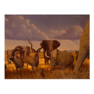 Elephants!  wildlife! postcard