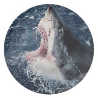 Elevated Shark mouth open Plate