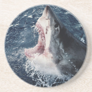 Elevated Shark mouth open Sandstone Coaster
