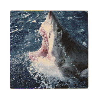 Elevated Shark mouth open Wood Coaster
