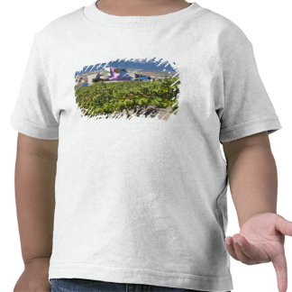 Elevated town view and Hotel Marques de Riscal T Shirts