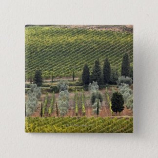 Elevated view of vineyard and olive trees button