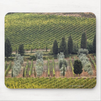 Elevated view of vineyard and olive trees mouse pad
