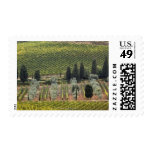 Elevated view of vineyard and olive trees postage