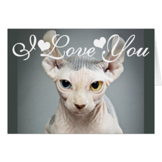 Elf Sphinx Cat Photo Image I Love You Card