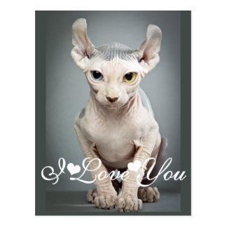 Elf Sphinx Cat Photo Image I Love You Postcard