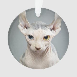 Elf Sphinx Cat Photograph