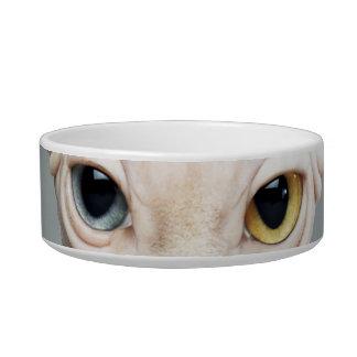 Elf Sphinx Cat Photograph Bowl