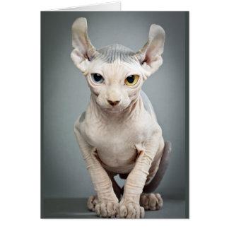 Elf Sphinx Cat Photograph Card