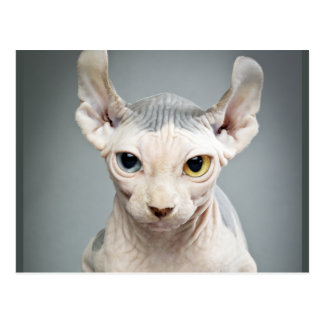 Elf Sphinx Cat Photograph Postcard