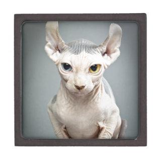 Elf Sphinx Cat Photograph Premium Jewelry Box