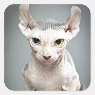 Elf Sphinx Cat Photograph Square Sticker