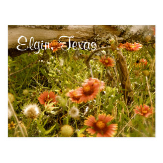 Elgin Texas Wildflower Postcard