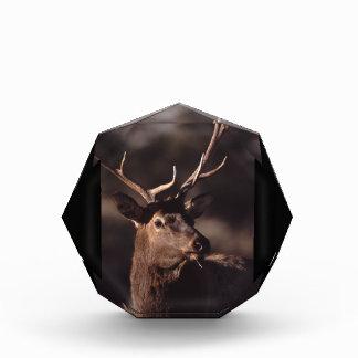 elk acrylic award