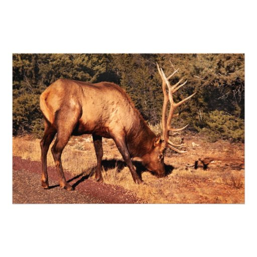 Elk -  An Elk Eating Personalized Stationery