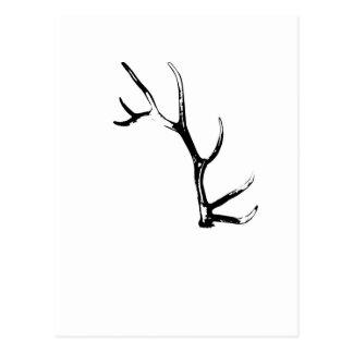 Elk Antler Postcard