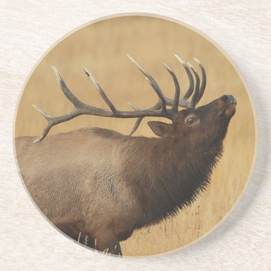 elk, antlers back drink coaster