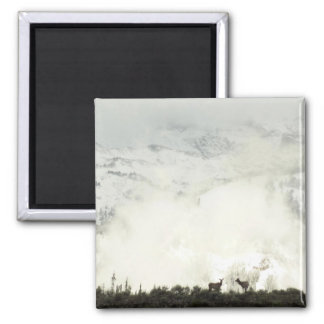 Elk at Grand Teton National Park Photography 2 Inch Square Magnet