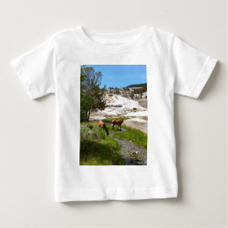 Elk at Mammoth Hot Springs Baby T-Shirt