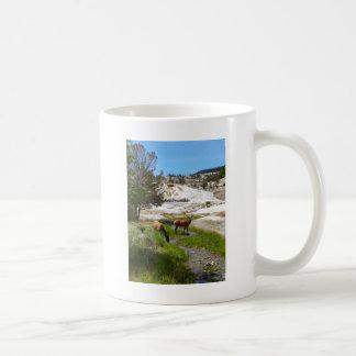 Elk at Mammoth Hot Springs Coffee Mug