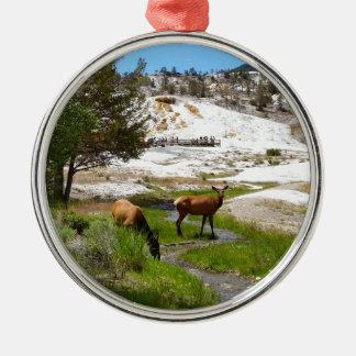 Elk at Mammoth Hot Springs Metal Ornament
