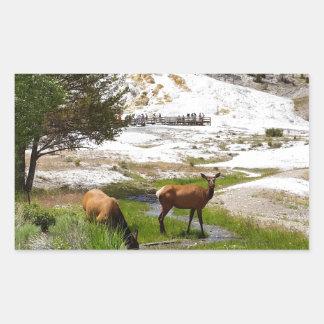 Elk at Mammoth Hot Springs Rectangular Sticker