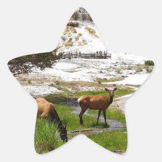 Elk at Mammoth Hot Springs Star Sticker