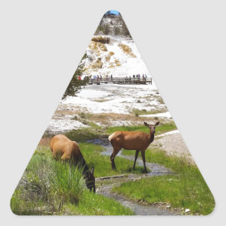 Elk at Mammoth Hot Springs Triangle Sticker