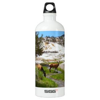 Elk at Mammoth Hot Springs Water Bottle