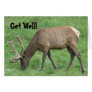 Elk Battle Scars Get Well Card