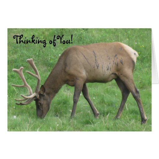 Elk Battle Scars Thinking Of You Card