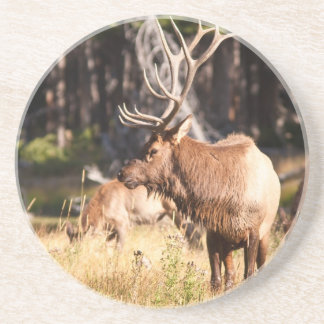 Elk Beverage Coaster
