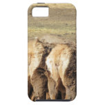 Elk Booty iPhone 5 Case