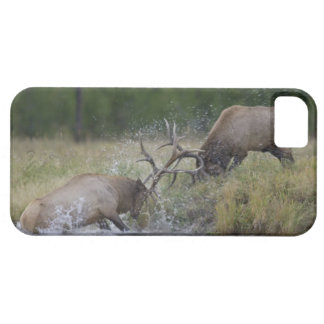 Elk Bulls fighting, Yellowstone NP, Wyoming iPhone SE/5/5s Case