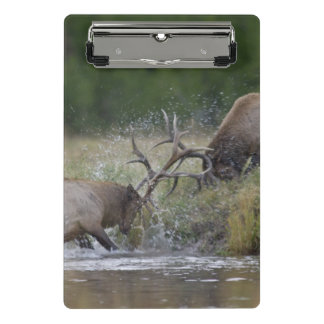 Elk Bulls fighting, Yellowstone NP, Wyoming Mini Clipboard