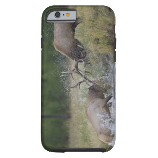 Elk Bulls fighting, Yellowstone NP, Wyoming Tough iPhone 6 Case