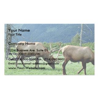 Elk Bulls Grazing Business Card