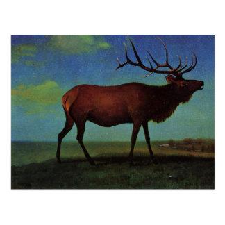 Elk By Albert Bierstadt Postcard