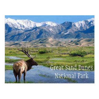 Elk by Creek Great Sand Dunes NP Postcard