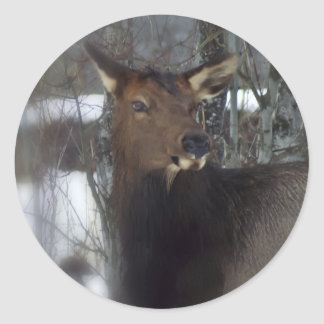 Elk By The River Classic Round Sticker