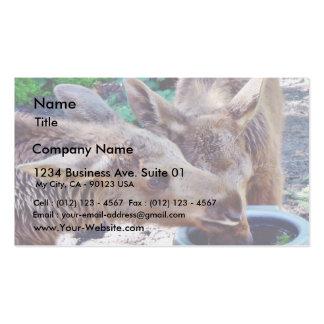 Elk Calves Drinking Business Card
